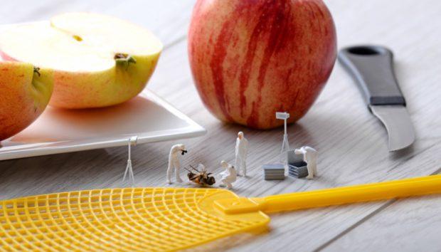 Να τι Πρέπει να Κάνετε για να μην Πλησιάζουν Μύγες στο Φαγητό σας!