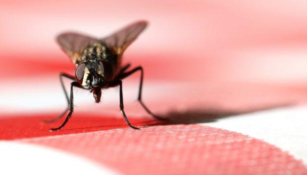 6 Έξυπνοι Τρόποι για να Εξοντώσετε τις Ενοχλητικές Μύγες