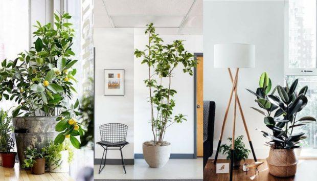 7 Πρωτότυποι Τρόποι για να Βάλετε Φυτά στο Σπίτι σας