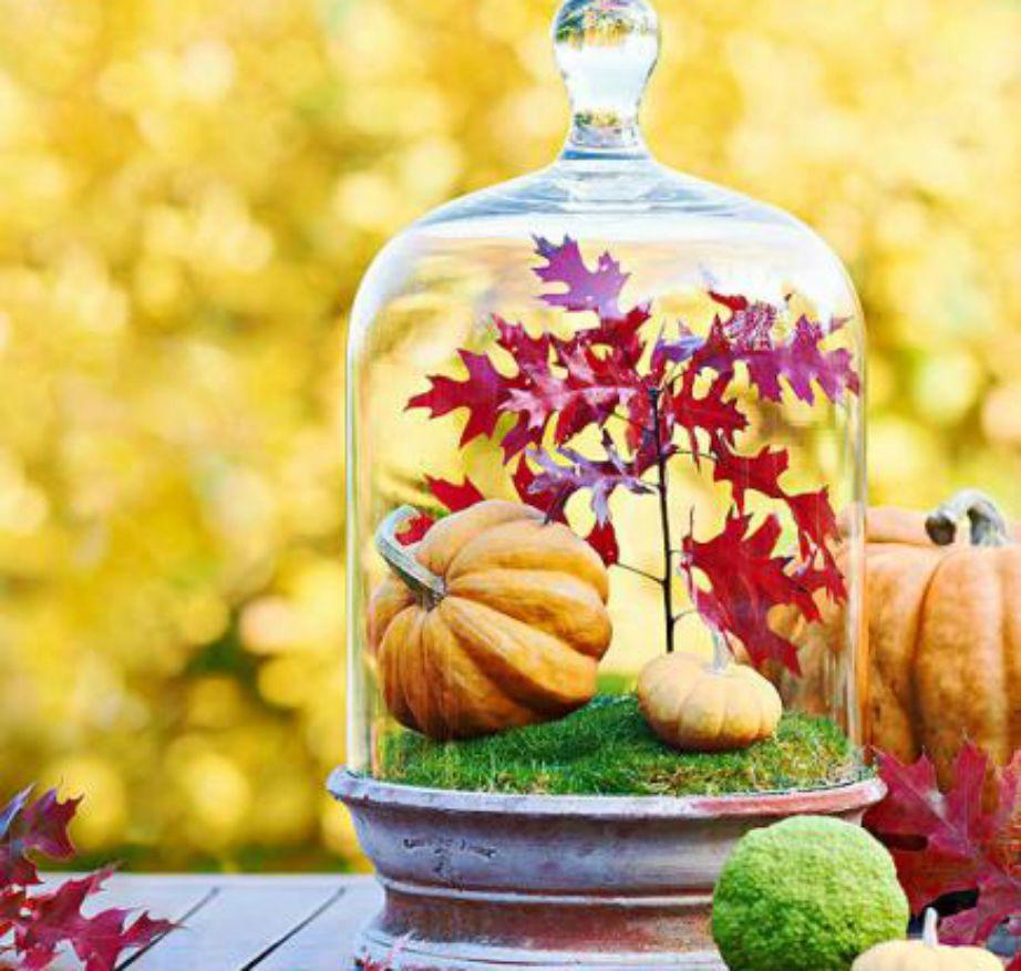Δείτε πόσο όμορφο μπορεί να γίνει το διακοσμητικό σας terrarium.