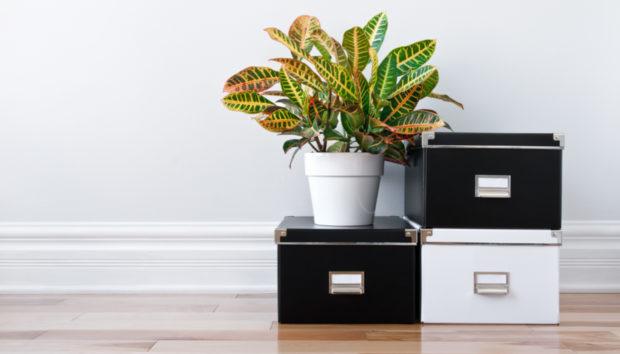 11 Πράγματα που Έχουν Όλοι οι Οργανωμένοι Άνθρωποι στο Σπίτι τους