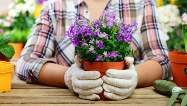 Να τι Πρέπει να Βάλετε στα Φυτά σας για να τα Σώσετε!