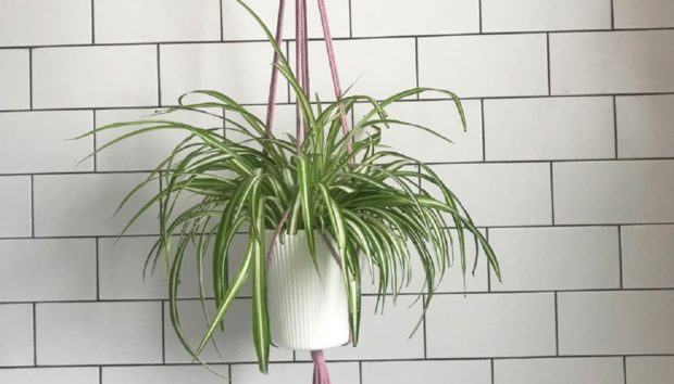 Φτιάξτε ένα Μακραμέ Κρεμαστό Καλάθι για τα Φυτά σας!