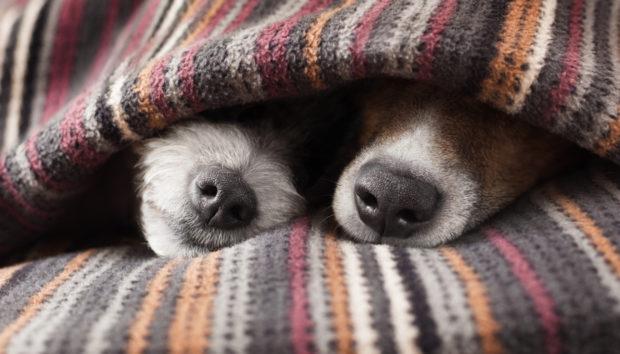 Κρυώνει Πράγματι ο Σκύλος μας τον Χειμώνα;