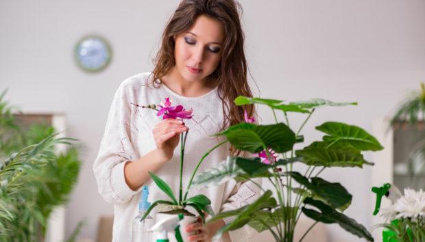 Βάλτε Αυτό το Φυτό στο Σπίτι σας και Προσεκλύστε Τύχη και Χρήματα!