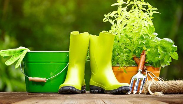 Ήρθε η Άνοιξη: 5+1 Τρόποι για να Φτιάξετε τον Κήπο των Ονείρων σας!