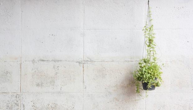 Ένα Σούπερ Κρεμαστό Φυτό για το Σπίτι σας!