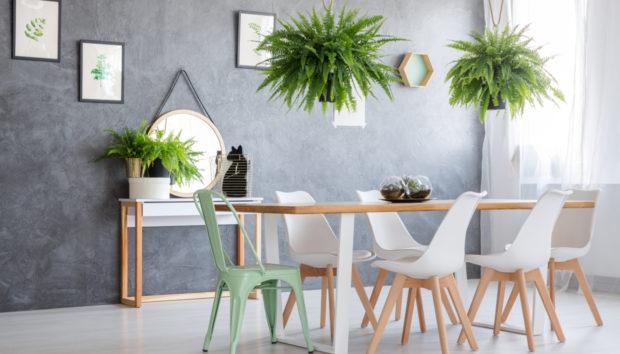 11 Περίεργα Αλλά Πανέμορφα Φυτά για το Σπίτι σας!