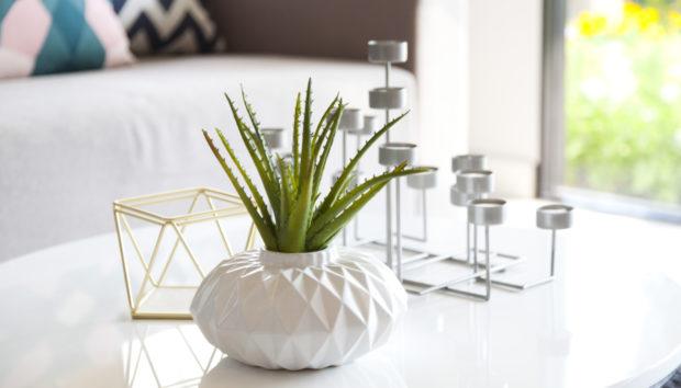 3 Chic Φυτά που θα Βρείτε σε Όλα τα Μοντέρνα Σπίτια!