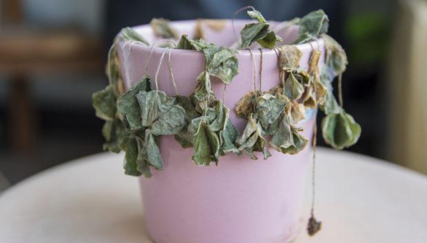 Πέντε Λάθη που θα Οδηγήσουν τα Φυτά σας στην Καταστροφή
