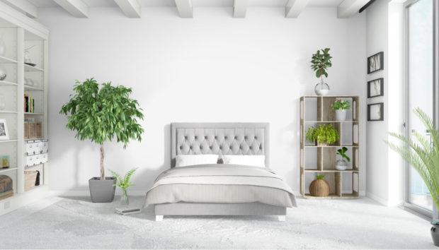 3 Φυτά για το Υπνοδωμάτιο που θα σας Χαρίσουν τον Καλύτερο Ύπνο!
