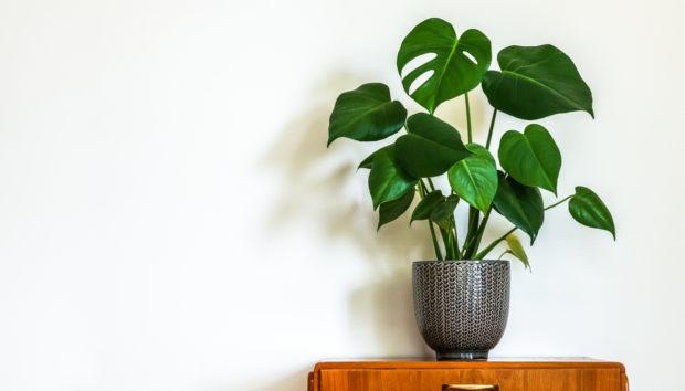Έτσι θα Σώσετε τα Μισοπεθαμένα Φυτά σας!