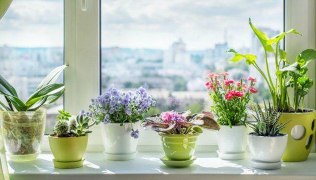 Γιατί Πρέπει να Ρίχνεις Καφέ στα Φυτά σου - Ο Απίθανος Λόγος που Έχει Φοβερό Αποτέλεσμα