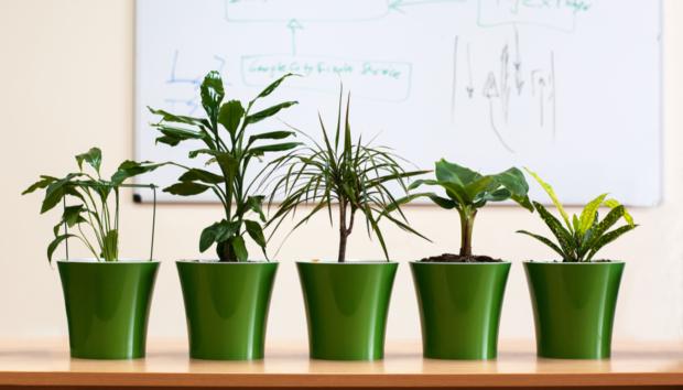 Φενγκ Σούι: Τα 5 Φυτά που θα Φέρουν Θετική Ενέργεια και Τύχη στο Σπίτι σου