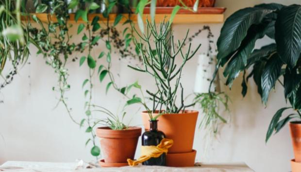 Τι Πρέπει να Κάνετε στις Πήλινες Γλάστρες σας πριν Βάλετε Νέα Φυτά -Το Έξυπνο Τρικ που δεν Ξέρατε