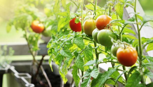 Τι να Φυτέψετε τον Απρίλιο στο Μπαλκόνι -Λαχανικά σε Σάκους Φύτευσης, Λουλούδια και Βολβούς της Εποχής
