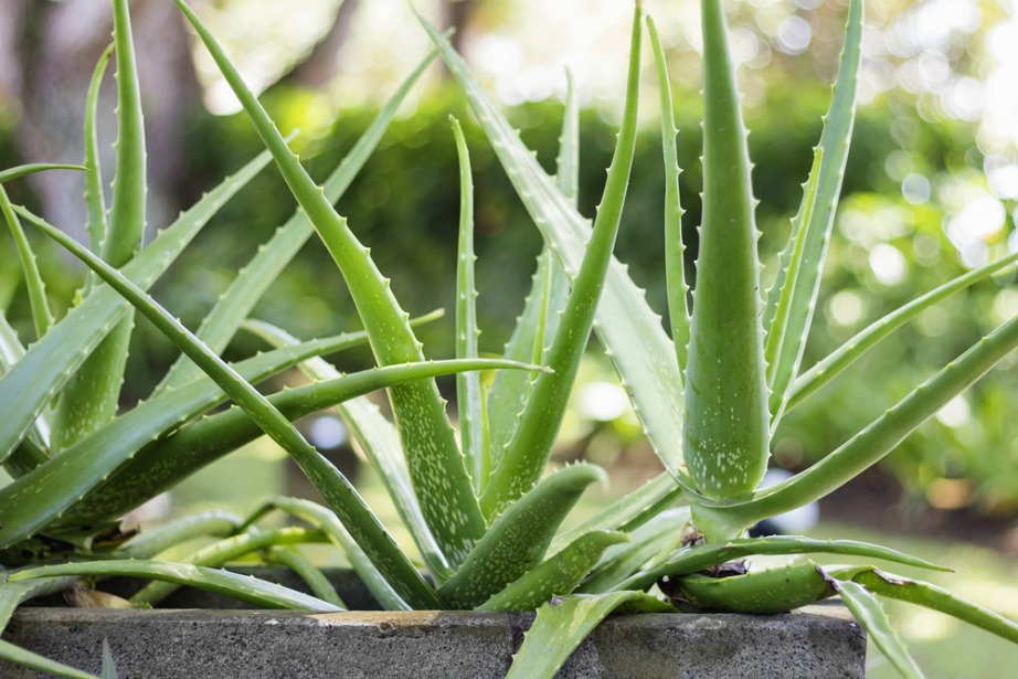 thehomeissue_(aloe)01
