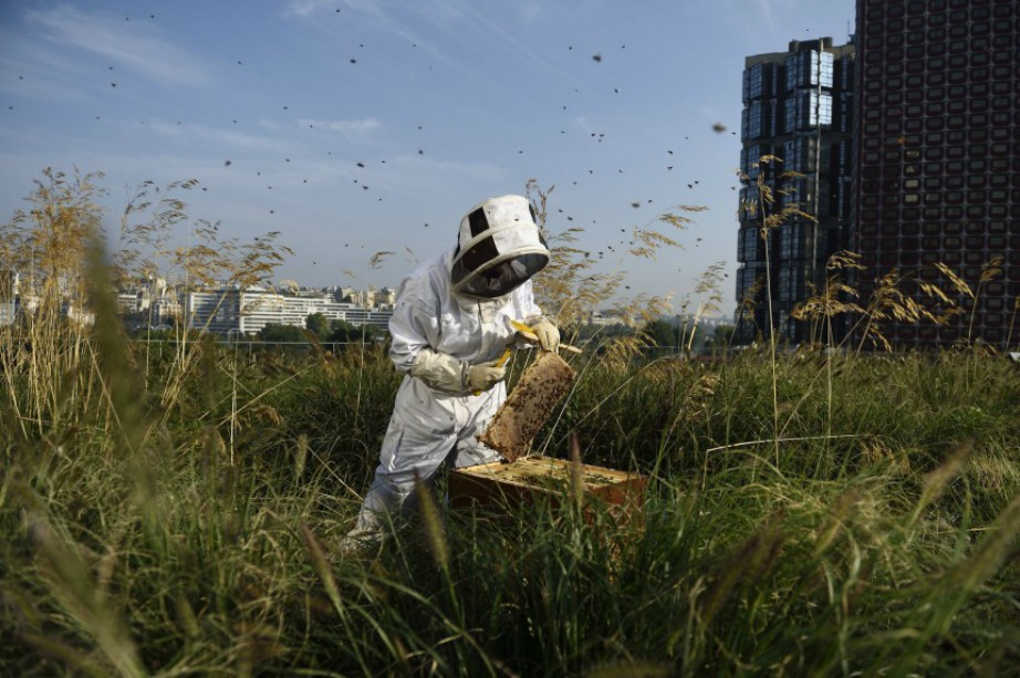 Στην στέγη του εμπορικού κέντρου έχουν γίνει οι απαραίτητες μελέτες για τη σωστή διαβίωση των μελισσών.