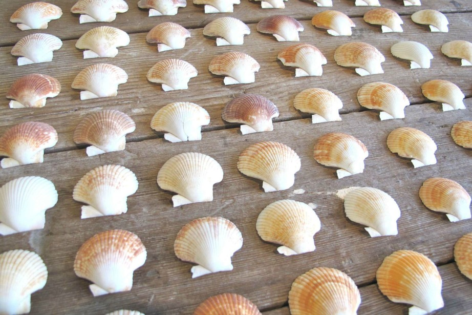 thehomeissue_shells01
