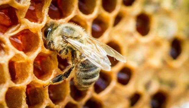 Πανεύκολος Τρόπος να Απαλλαγείτε Από τις Μέλισσες