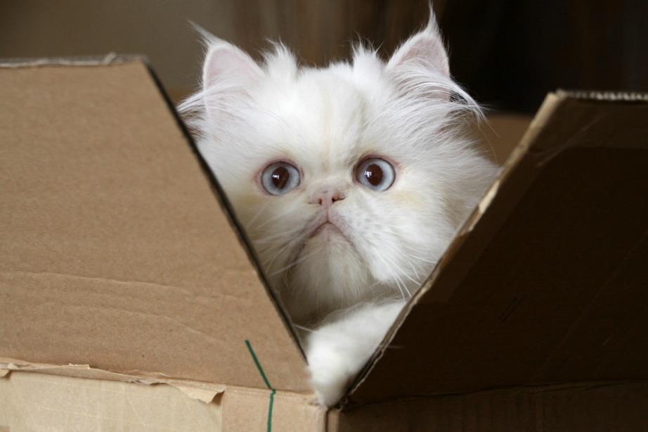 fda820eb8504 Φτιάξτε για τη Γάτα σας Κατασκευή Απασχόλησης με Μηδενικό ...