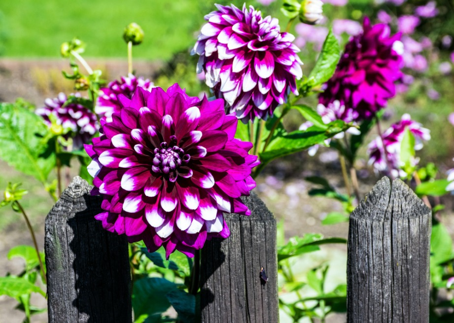 thehomeissue_(plants)03
