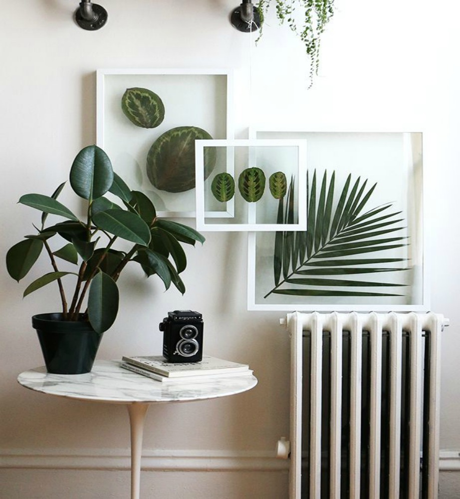 thehomeissue_(plant)03