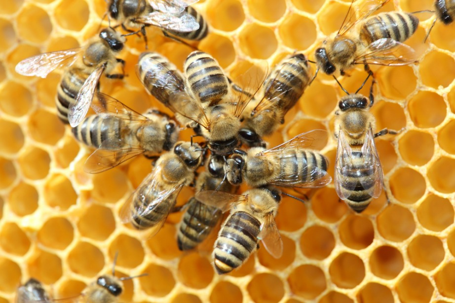 thehomeissue_(bee)01