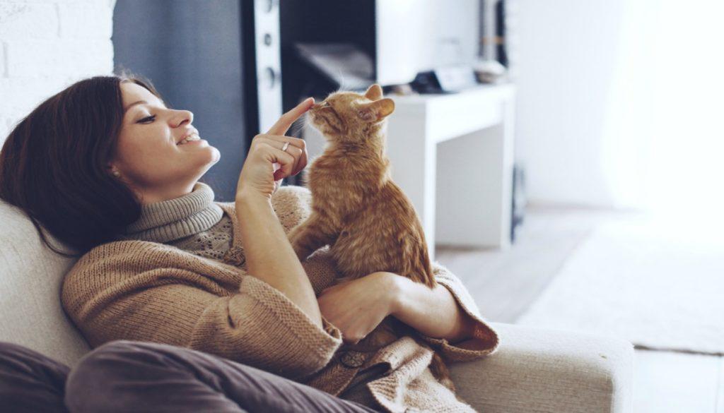 8e11bae80f1f Φτιάξτε για τη Γάτα σας Κατασκευή Απασχόλησης με Μηδενικό Κόστος