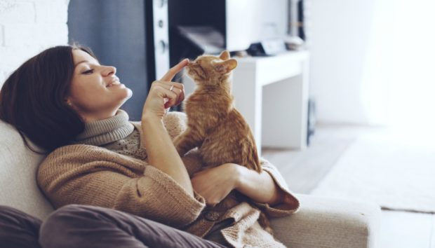 Φτιάξτε για τη Γάτα σας Κατασκευή Απασχόλησης με Μηδενικό Κόστος