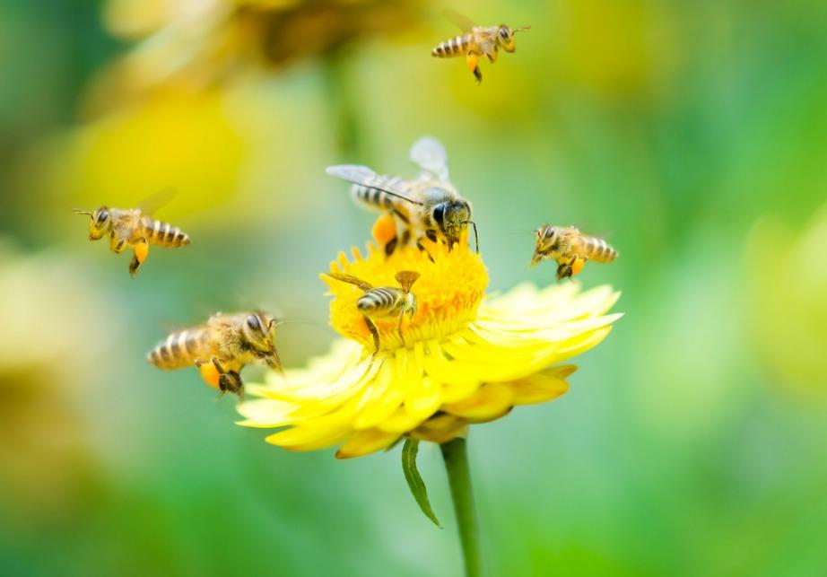 Ψεκάστε μόλις βραδιάσει και τα λουλούδια σας με το σπρέι νερού και ξιδιού.
