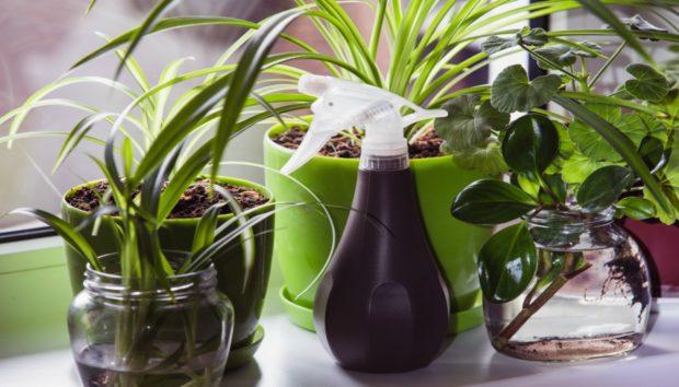 9 Φυτά Που θα Αγαπήσετε Λόγω της Εντομοαπωθητικής τους Δράσης