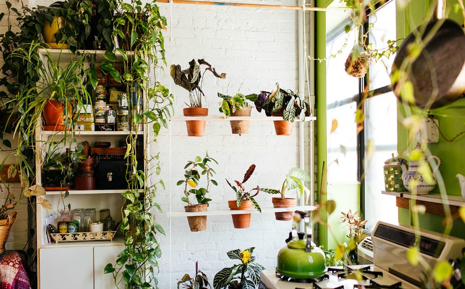 thehomeissue_(greenhouse)01