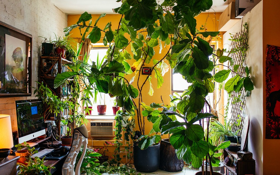 thehomeissue_(greenhouse)04