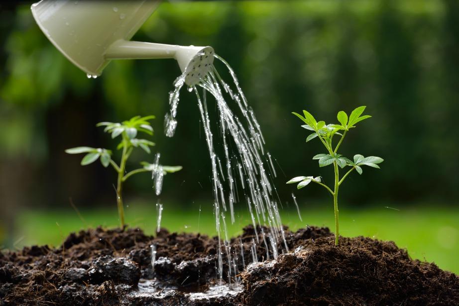 Ποτίστε τα φυτά σας με βρόχινο νερό.