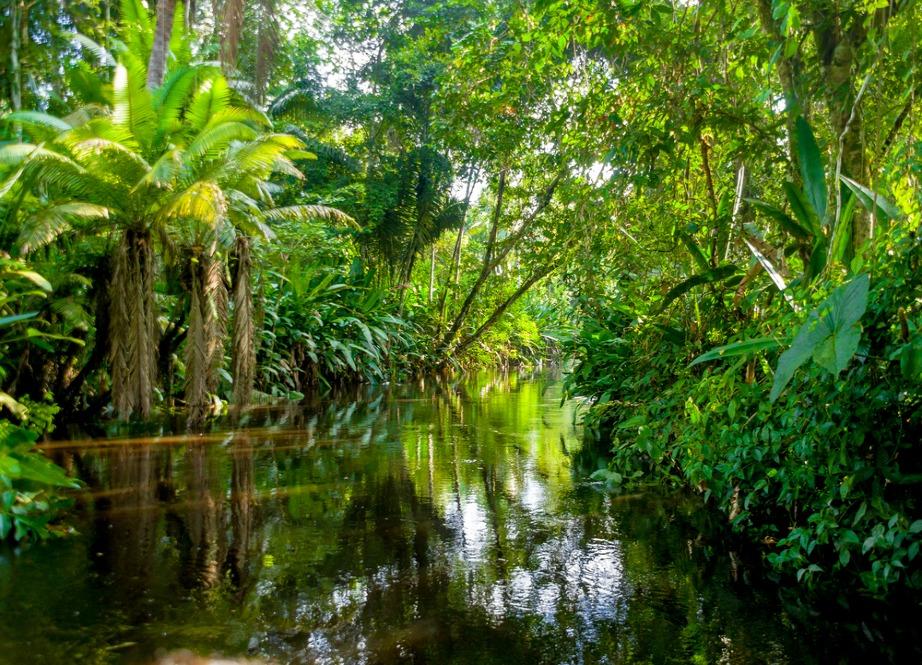 Ο Αμαζόνιος γονιμοποιείται από την άμμο της Σαχάρας.