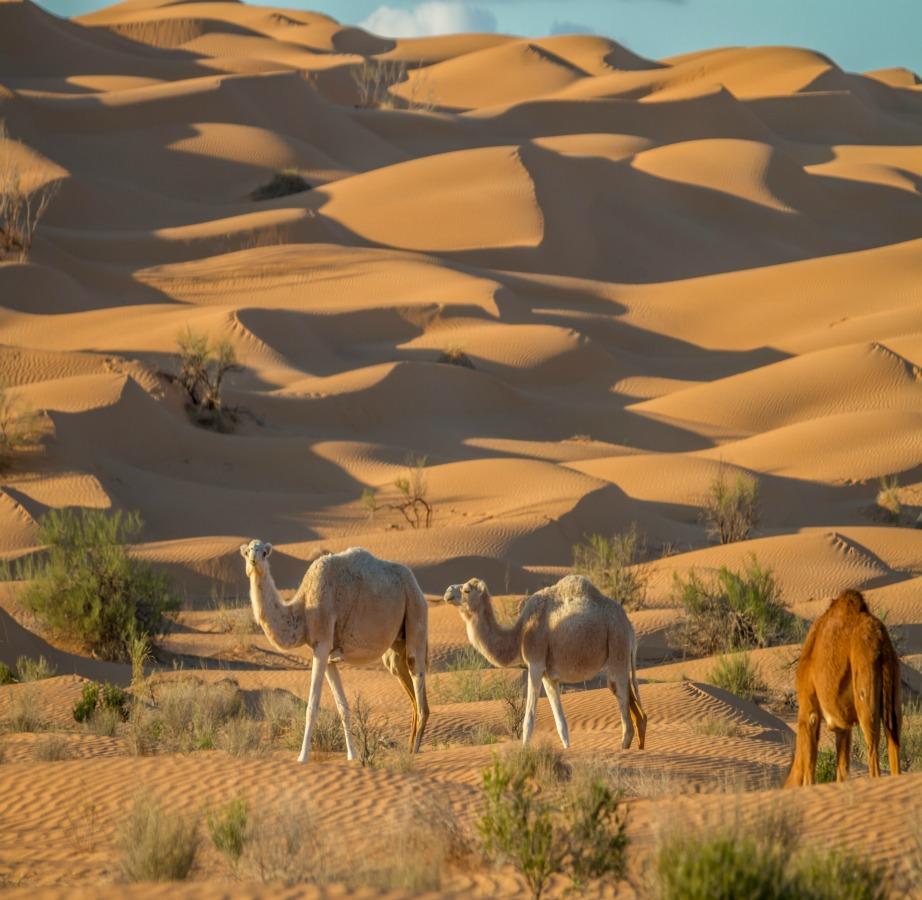 Οι έρημοι καλύπτουν το 1/3 του πλανήτη.