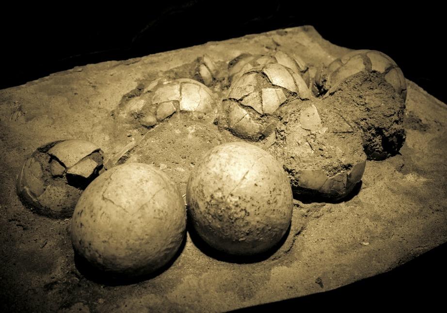 Αυγά δεινοσαύρου που βρέθηκαν σε έρημο.