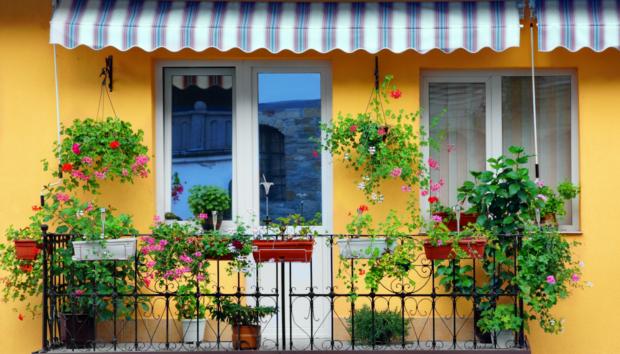 Δείτε Πώς θα Κάνετε τα Φυτά σας να «Αντισταθούν» στη Ζέστη