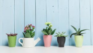 thehomeissue_plants01