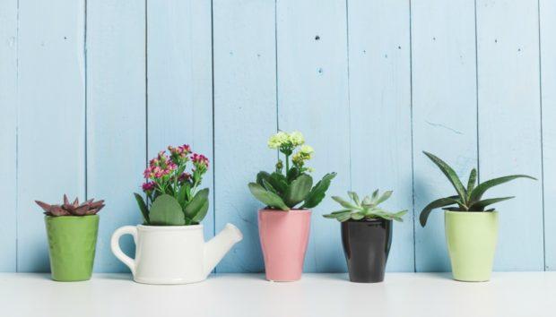 Έτσι θα Σώσετε τα Φυτά και τα Λουλούδια σας από τη Ζέστη!
