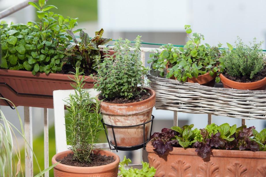 Υπάρχουν πολύ τρόποι για να διατηρηθούν ακμαία τα φυτά σας εν μέσω καύσωνα.