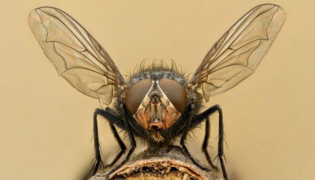 Απαλλαγείτε με Φυσικούς Τρόπους από τις Μύγες
