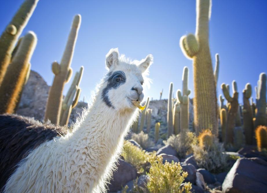 Πληθώρα ειδών ζώων και φυτών ζουν και αναπτύσσονται στις ερήμους.