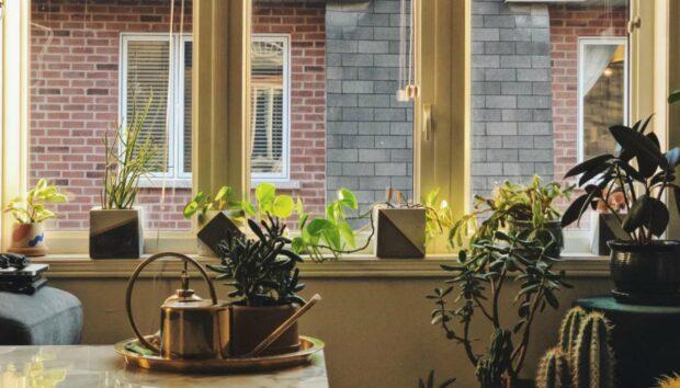 4 Φυτά Εσωτερικού Χώρου για το Γραφείο και το Σπίτι -Ομορφαίνουν τον Χώρο, Χωρίς Πολλή Φροντίδα