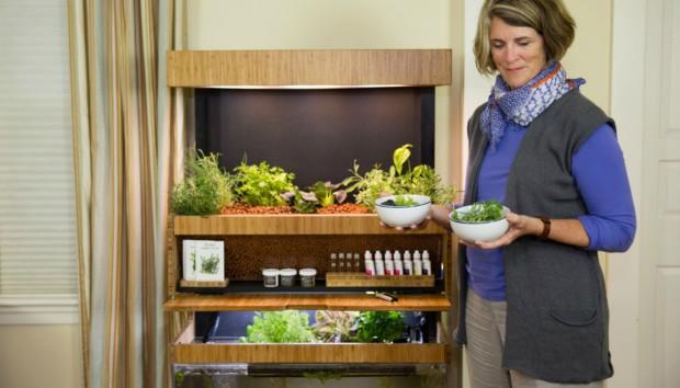 Βάλτε τον Πρώτο Μίνι Κήπο Εσωτερικού Χώρου Μέσα στο Σπίτι σας!