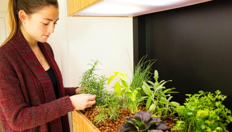 Στον κήπο μπορείτε να καλλιεργήσετε φρούτα, λαχανικά και βότανα.