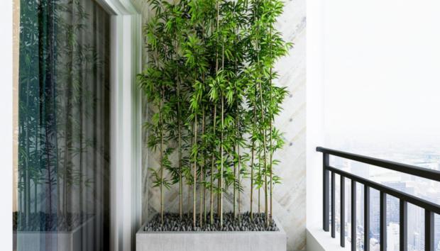 5 Ψηλά Φυτά για Ιδιωτικότητα στην Αυλή και τον Κήπο. Ίσα με το Μπόι σας και Παραπάνω