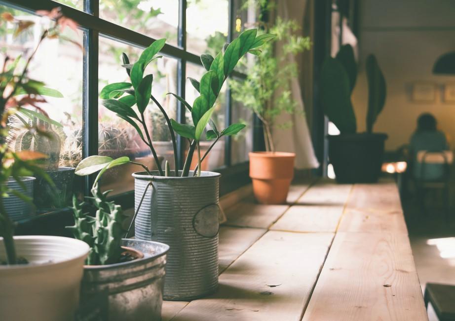 Φυτά που γνωριμίες