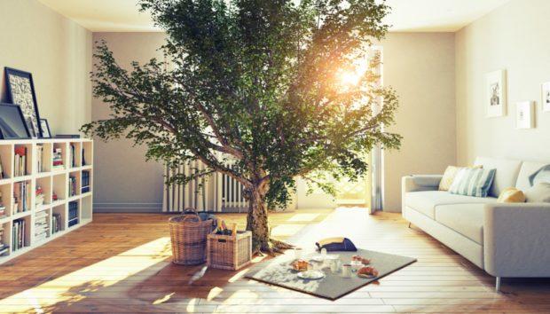 Κάντε το Σπίτι σας Eco-Friendly με 6 Κινήσεις